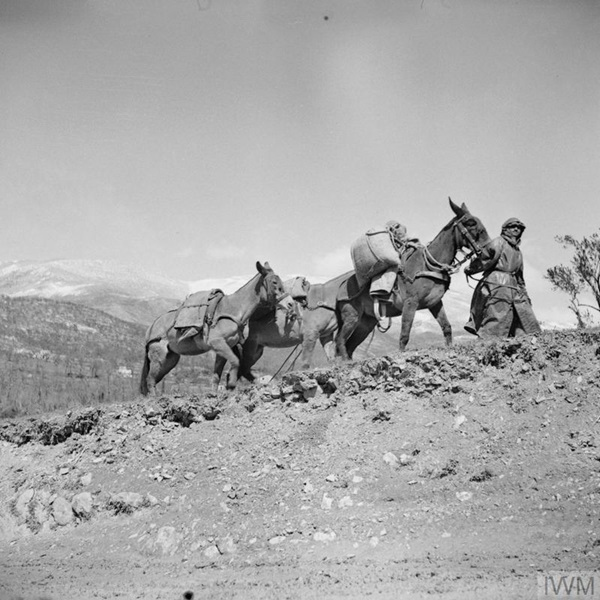 Porters of an Indian Mule Company transporting supplies to troops in the mountains.