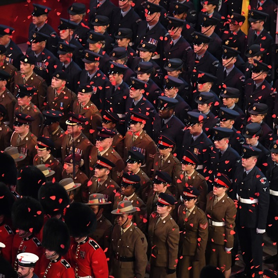 Festival of Remembrance falling petals