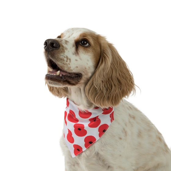 Dog wearing Pets at Home white scarf with poppies design.